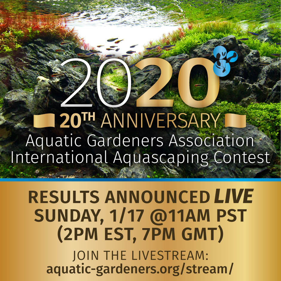 AGA Aquascaping Content Results, Coming Soon!