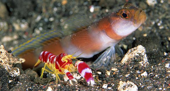 Mystery Reef Species