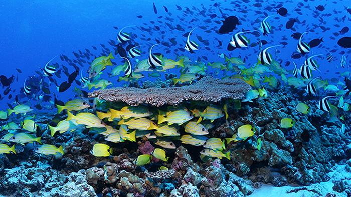 www.reef2rainforest.com