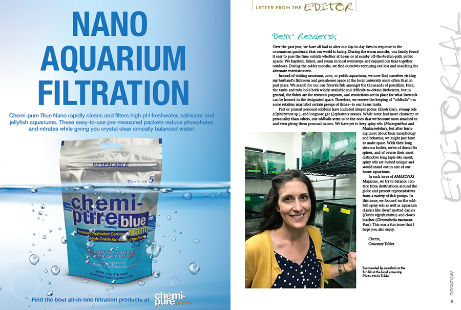 """""""In each issue of AMAZONAS Magazine, we try to balance content from destinations around the globe and present representatives from a variety of fish groups. In this issue, we focused on the oddball spiny eels as well as aquarium classics like dwarf spotted danios (Danio nigrofasciatus) and clown loaches (Chromobotia macracanthus)."""" Executive Editor Courtney Tobler concludes, """"This was a fun issue that I hope you also enjoy."""""""