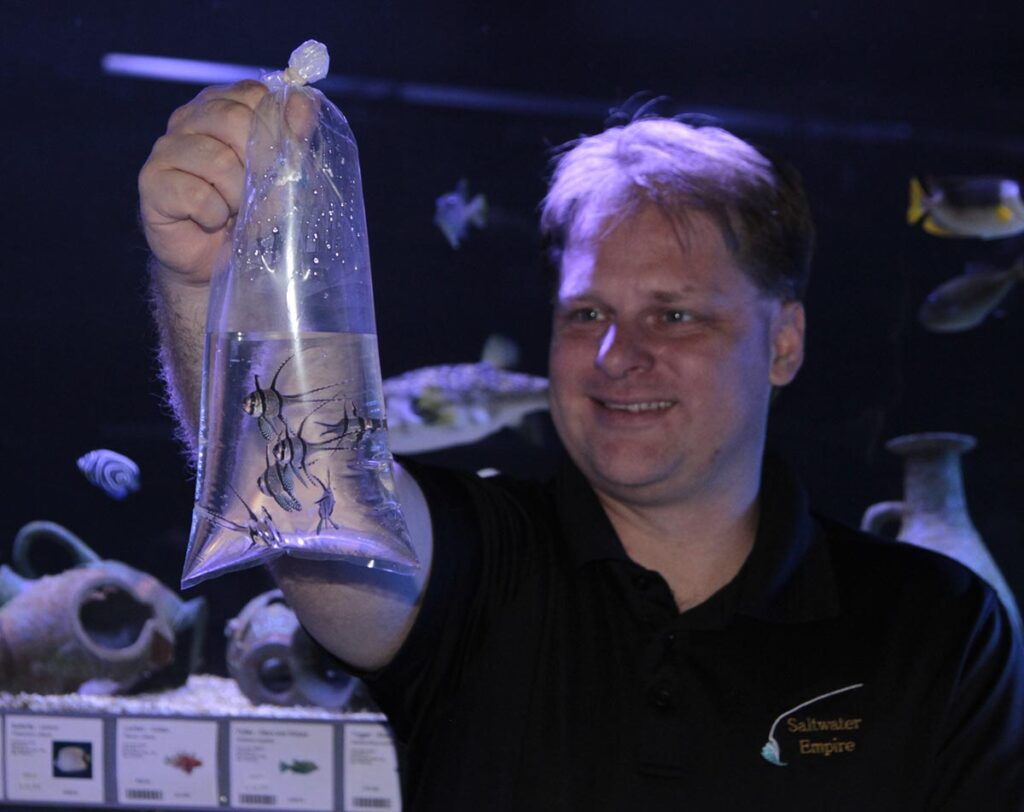 Fritz Grimm, the owner of the former Minnesota-based retailer Saltwater Empire, holds a bag of Banggai Cardinalfish, Pterapongon kauderni, available for retail sale. Image circa 2013.