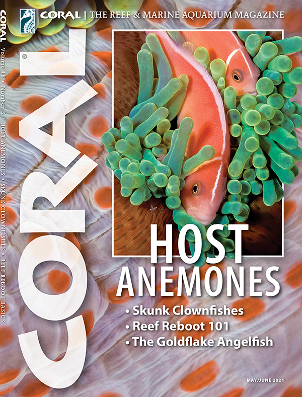 Cover of CORAL Magazine Volume 18, Issue 3 – HOST ANEMONES – May/June 2021. On the cover: Amphiprion perideraion (Pink Skunk Anemonefish) with Heteractis magnifica host anemone. Franco Banfi. Background: Stichodactyla mertensii (Merten's Sea Anemone). Both: Blue Planet Archive.