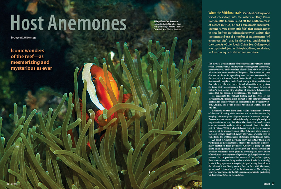 "CORAL New Issue ""HOST ANEMONES"