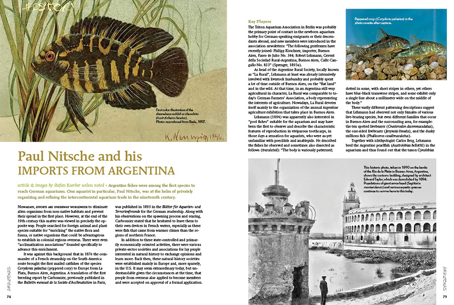 Stefan Koerber provides a lesson in aquarium history, with a focus on the Argentine fishes that were among the first species to reach German aquariums. One aquarist in particular, Paul Nitsche, was at the helm of privately organizing and refining the intercontinental aquarium trade in the nineteenth century.