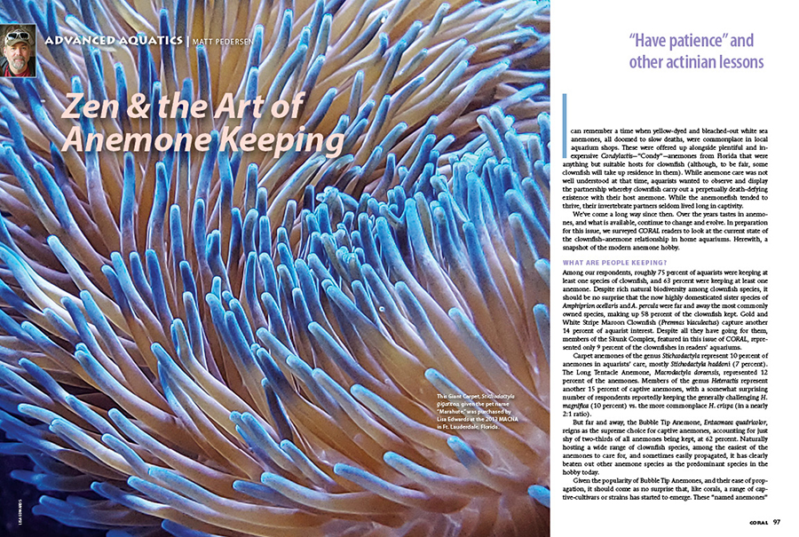Matt Pedersen takes the pulse of the anemone & clownfish hobby, compiling and presenting your own words of wisdom with reader photography from Lisa Edwards and Cynthia Reyes Taylor in Zen & the Art of Anemone Keeping.