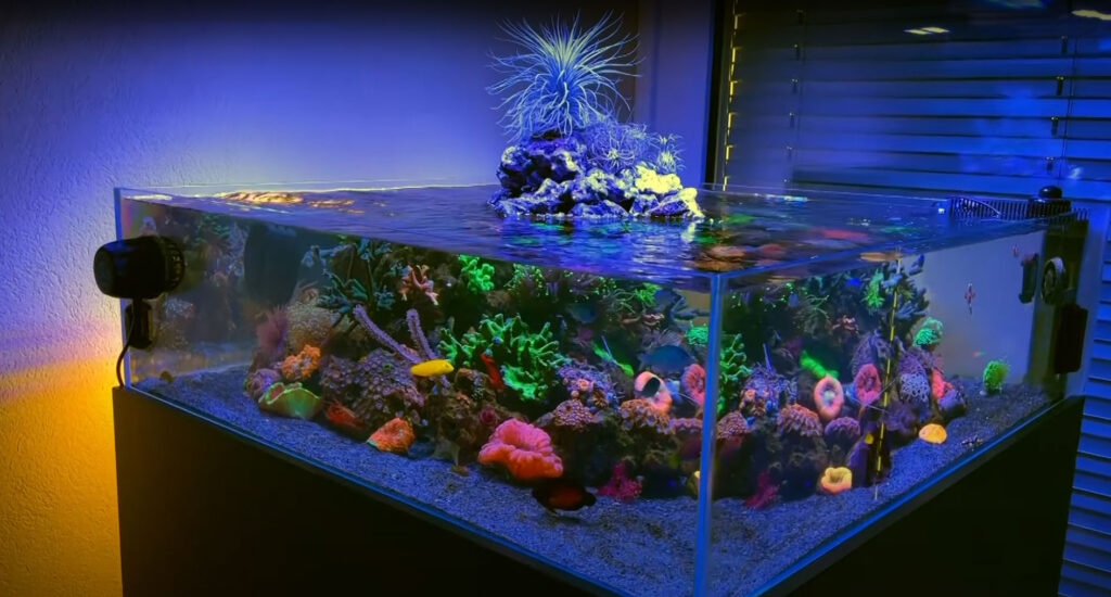 """Watch the video from Swiss and Salty to see how this beautiful shallow """"Volcano Reef"""" came together!"""
