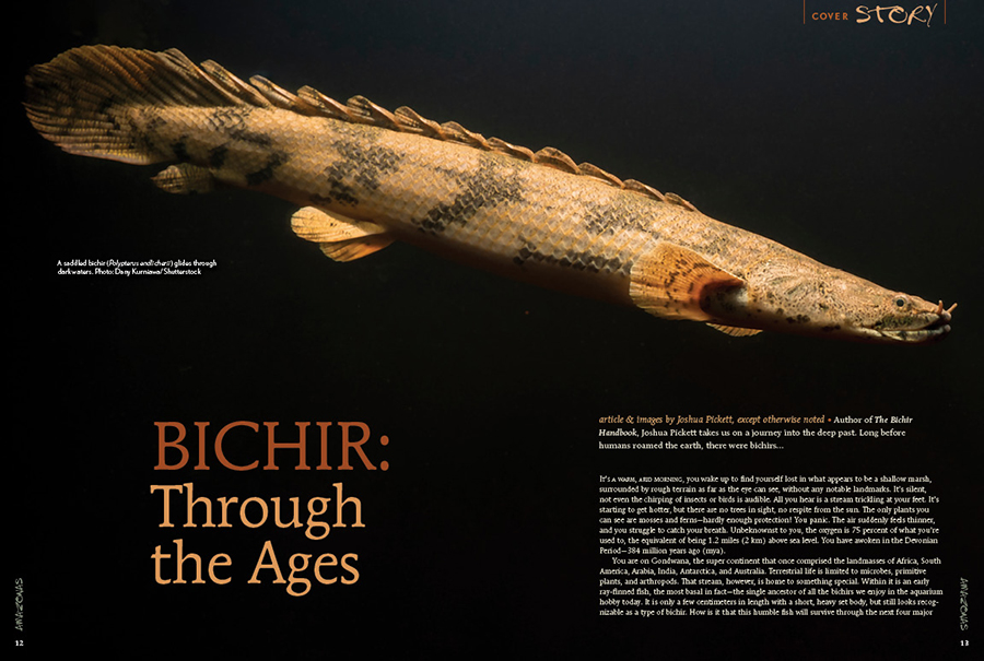 Author of The Bichir Handbook, Joshua Pickett takes us on a journey into the deep past. Long before humans roamed the earth, there were bichirs…
