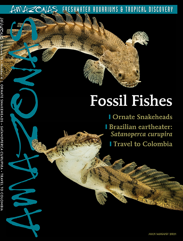 AMAZONAS Magazine, Volume 10, Number 4, FOSSIL FISHES, on sale June 1st. On the cover: Polypterus endlicherii (the saddled bichir) by Dany Kurniawan/Shutterstock
