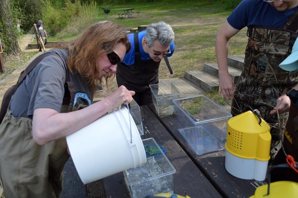 Fishing at Square Lake actually concluded rather quickly with hundreds of fishes caught. Here, Jenny Kruckenberg pours some of the catch into small, clear containers for observation, photographing, and sorting.