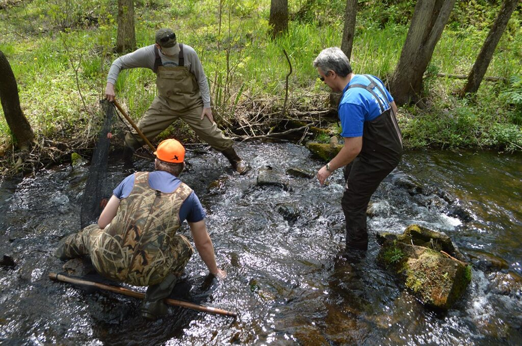 The group wasted no time getting to fishing. Again, some aquarists used seines to block the creek, while a third person would shuffle downstream towards it, corralling fish in the waiting net.