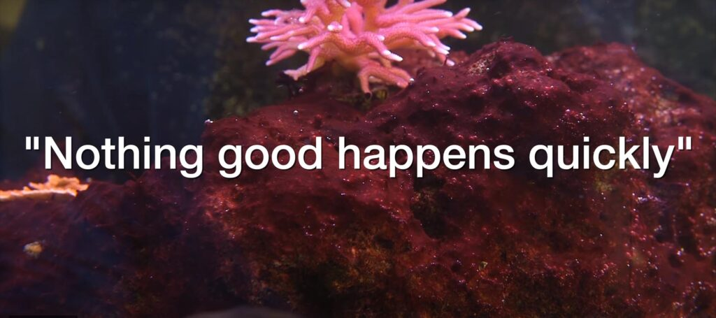 """""""Nothing good happens quickly"""" in a reef aquarium, or so everyone says. Is it true?"""