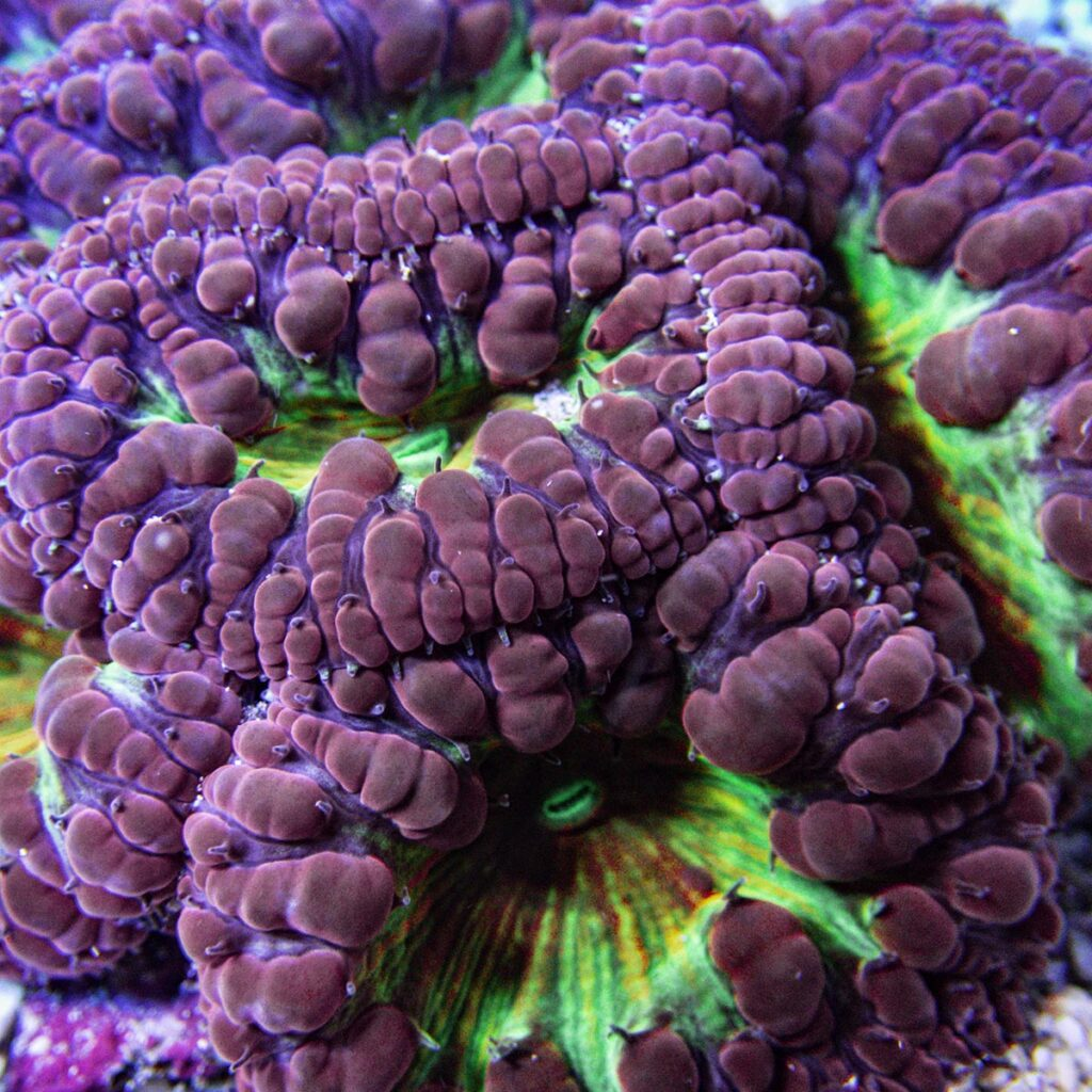 MYSTERY CORAL: Softball for Summer