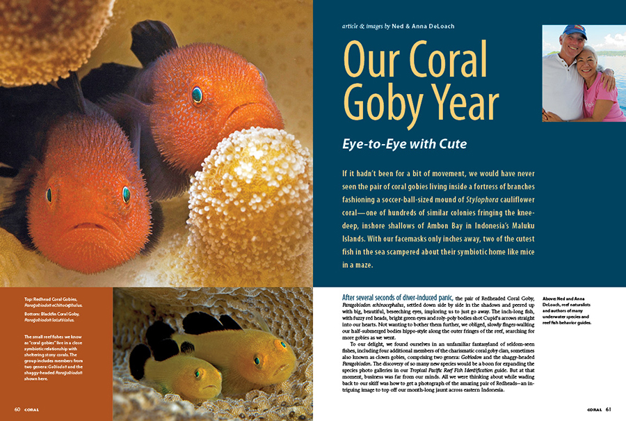 Come eye-to-eye with Cute as Ned & Anna DeLoach begin a photographic obsession with the coral gobies.