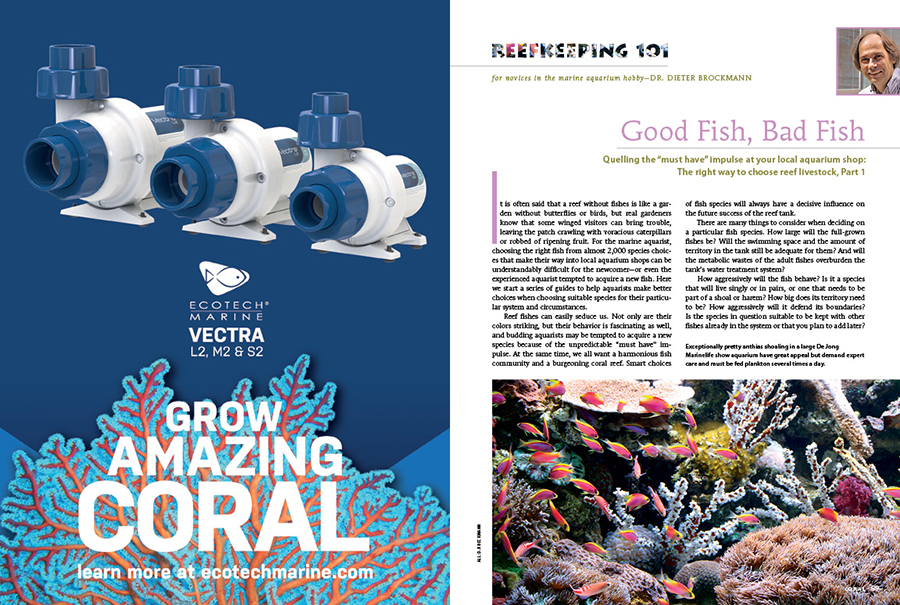 Dr. Dieter Brockmann lays the foundation for smart fish-purchasing decisions in Reefkeeping 101: Good Fish, Bad Fish.