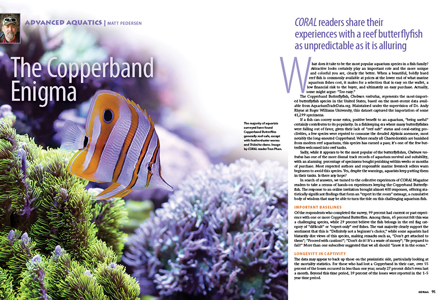 Unpredictable and alluring, CORAL readers shared their collective wisdom keeping the often challenging Copperband Butterflyfish, Chelmon rostratus. Matt Pedersen tallies the results in this issue's Advanced Aquatics.
