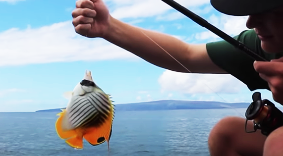 Hawaii's Aquarium Fishery Hopes for Re-Opening
