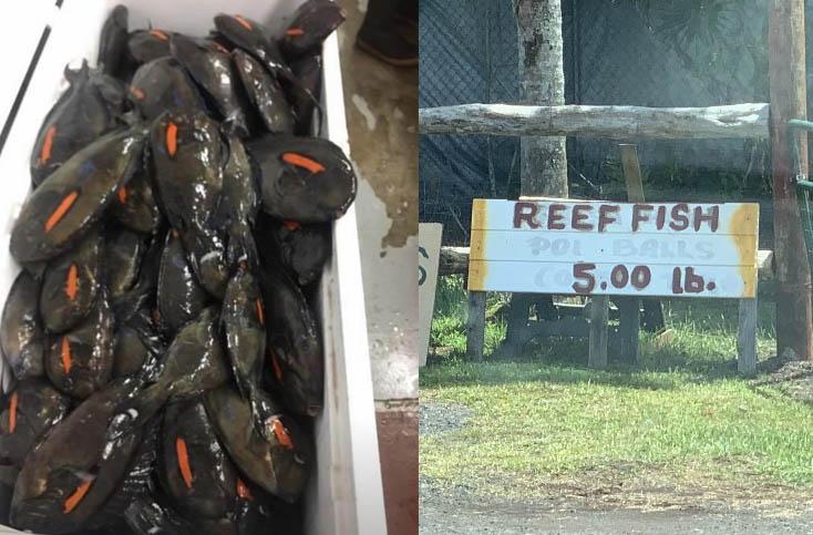 Hawaii's Fishy Double Standard