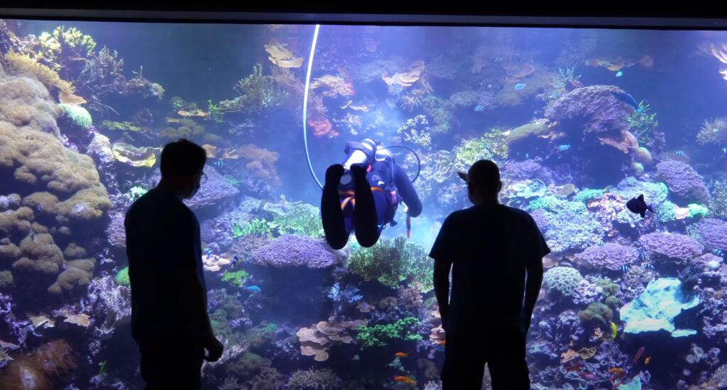 VIDEO: 65,000 L Reef Tank Tour!