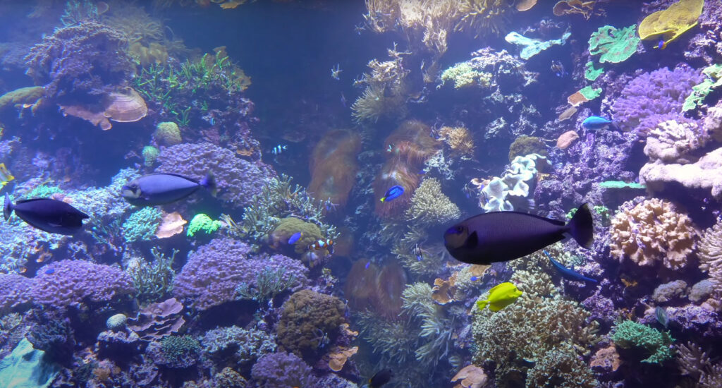 All grown up; the Zoo Rostock reef in 2021!