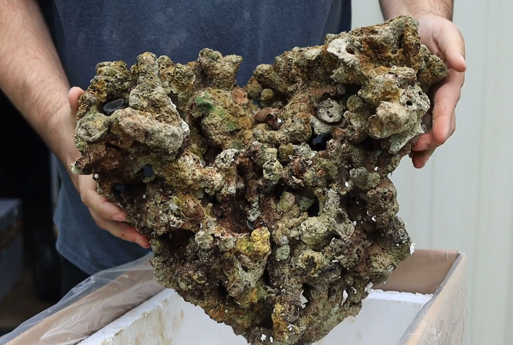 This large piece of Jakarta live rock is riddled with passages and pockets, a structure that many aquarists find desirable.