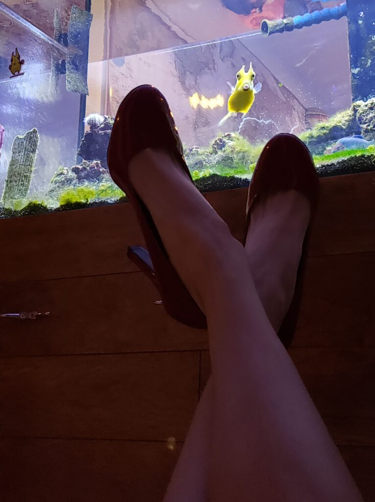 Marine biologist @waterlogged posted a picture of her classic black heels in front of her famous Cowfish named Frank.