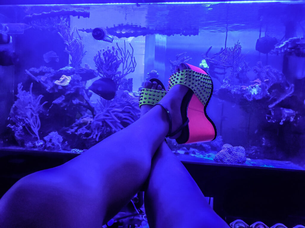 @reef_felicia my own submission to #reefinginheels