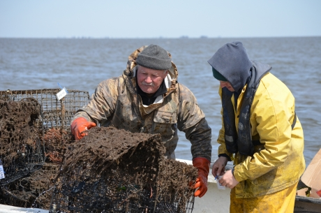 Derelict crab pots are removed from coastal waters. (Photo Credit: Elizabeth Zimmermann, Stockton University)