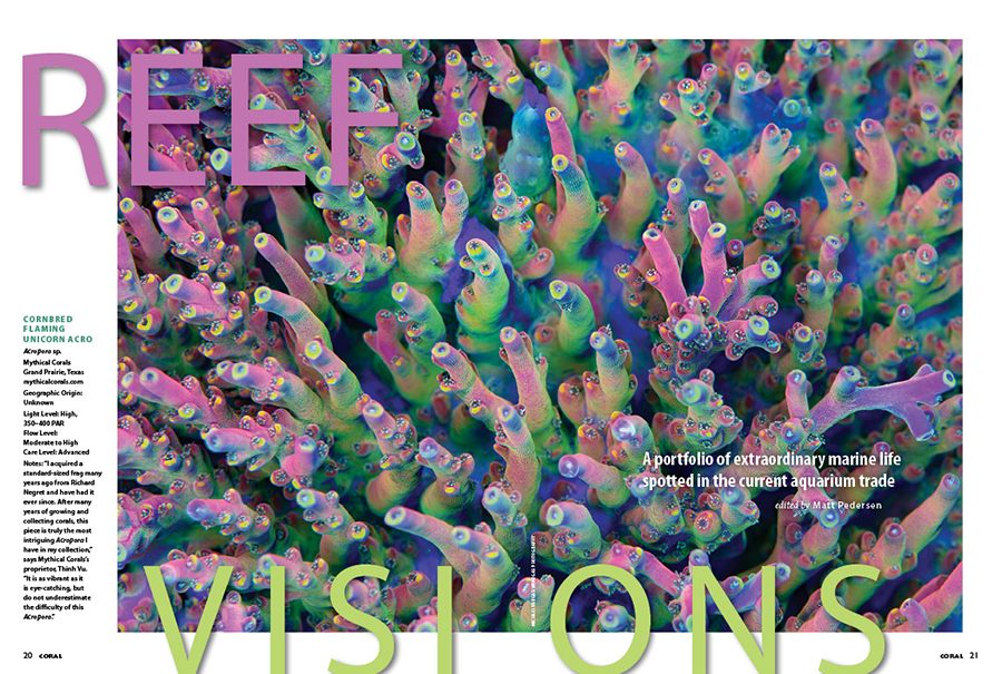 REEF VISIONS: A portfolio of extraordinary reef life spotted in the current aquarium trade. In this issue, photographer Michael Vargas wows us with a stunning Cornbred Flaming Unicorn Acropora, photographed at Mythical Corals, as the opening spread.