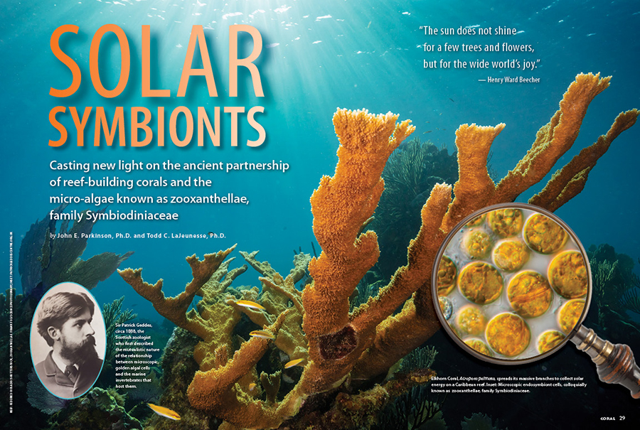 """CORAL New Issue """"SOLAR SYMBIONTS"""