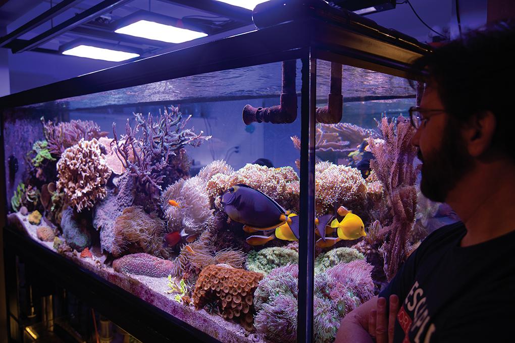 Aquarium Portrait: Melev's Reef