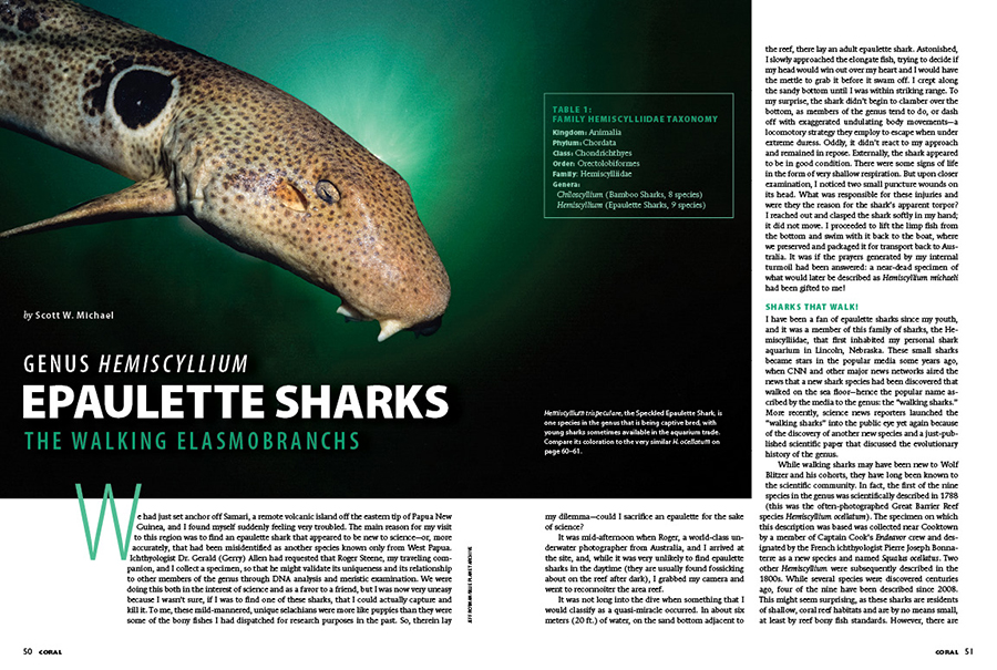 Coral contributor Scott W. Michael shares a detailed review of some of the most eminently suitable sharks for the home saltwater aquarium; the Epaulette Sharks of the genus Hemiscyllium, often considered to be the walking Elasmobranchs.