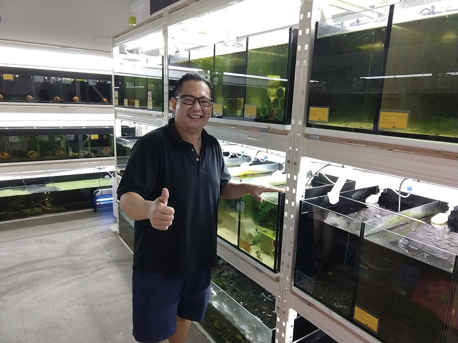 Louis Law, owner of Aquatic Glasselli in Singapore, indulged me in my request for Malaya shrimp.