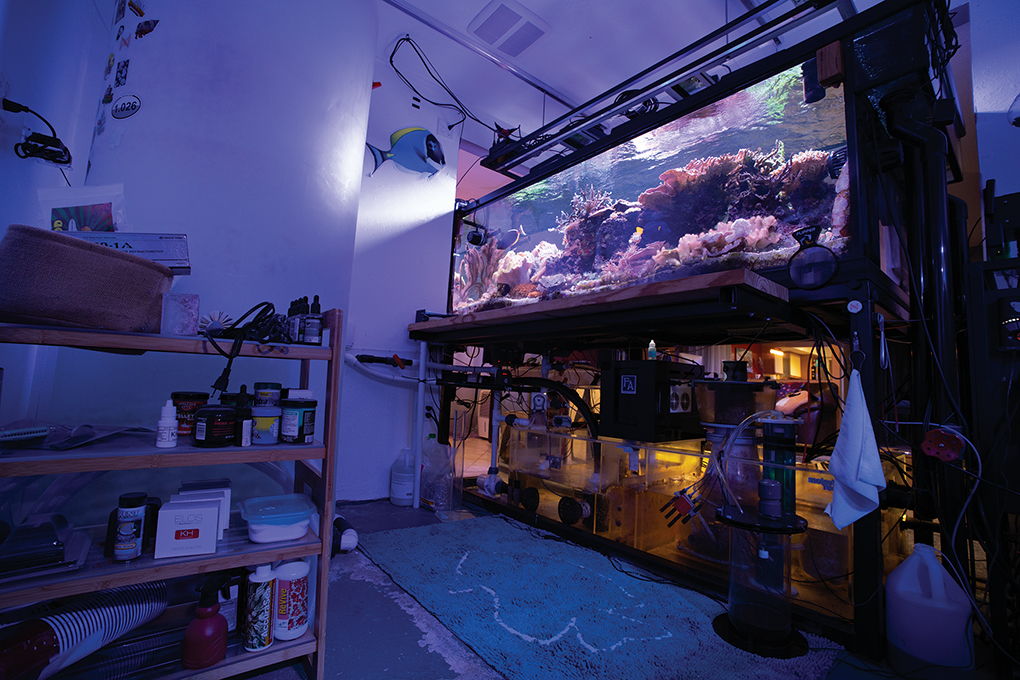 View from the fishroom: The open steel stand allows for easy access and an industrial aesthetic.