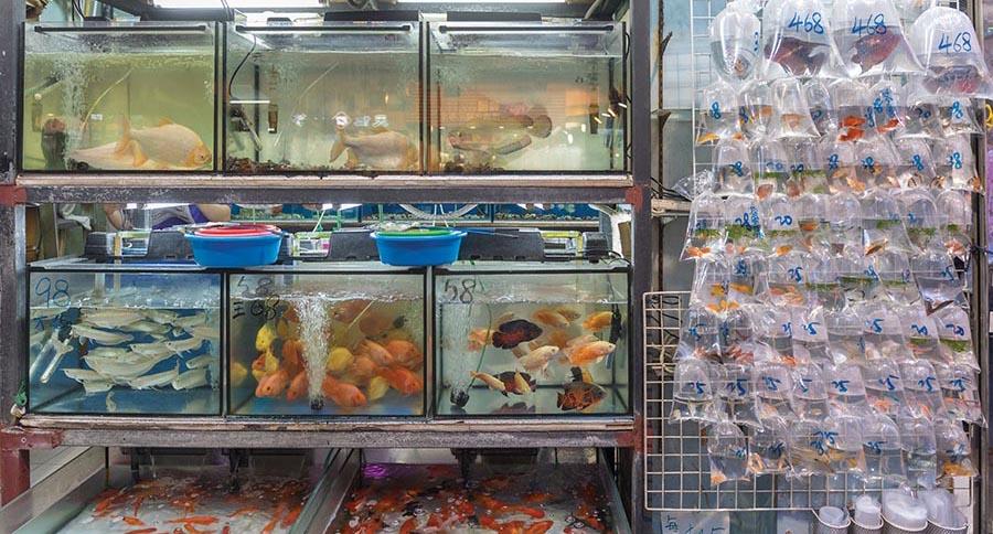 AMAZONAS Excerpt: Importing Aquarium Livestock