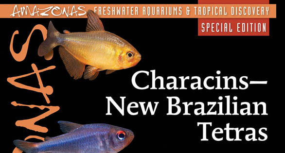 CHARACINS: the First-Ever AMAZONAS Magazine Special Edition