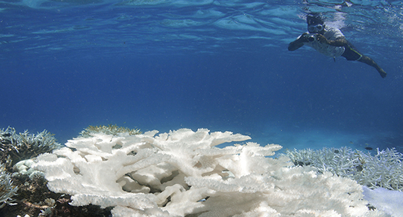 And soon gone? Coral reefs disappearing in many areas.