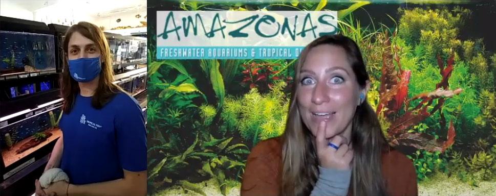 VIDEOS: AMAZONAS Interviews The Wet Spot Tropical Fish